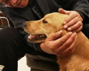 This Dog Walked 62 Miles for 2 Weeks to Get Back Home