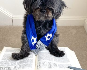What Exactly is a Bark Mitzvah?