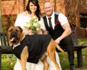 Couple Gives Up Their Dream Wedding So Terminally Ill Dog Can Be There To Celebrate