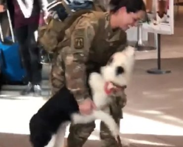 Dog Can't Contain Herself When Soldier Girl Returns Home
