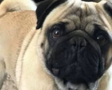 A Family's Missing Dog is Found Listed on Craigslist