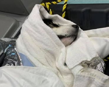 Firefighters Brave Freezing Waters to Rescue Dog from Icy River
