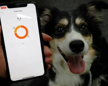 New Smart Dog Collar Tells Owners What's in a Bark