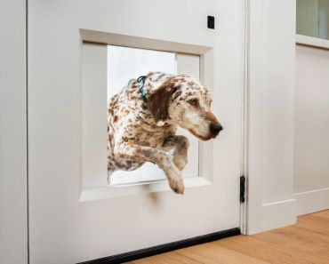 Chamberlain Builds a $3,000 Garage Opener for Your Dog