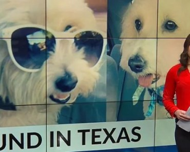 New Mexico Dog Found in Texas Four Years after it Went Missing