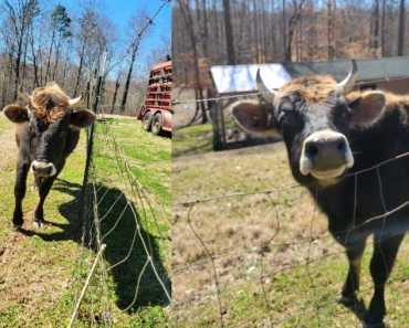 """Animal Control Finds Home for its """"Largest Dog Ever"""""""