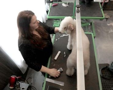 Wisconsin Dog Groomer Becomes Hit on Prime-TV