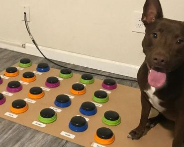 A Speech Therapist Taught Her Dog How to Speak