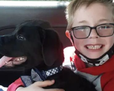 Boy Sells his Pokemon Cards to Pay for His Sick Dog's Vet Bill