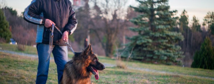 Israel is Testing Dog Poop DNA to Fine Owners Who Don't Clean Up