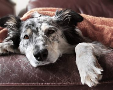 Rare Dog Disease on the Rise in West LA County