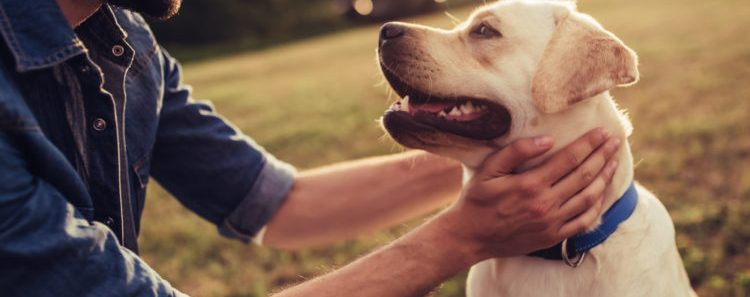 Are Millennials Obsessed With Dogs?