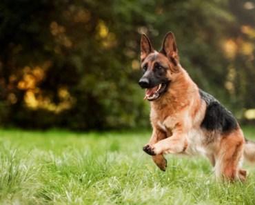 Firefighters, Good Samaritans Help Save Life of Veteran's Service Dog