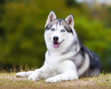 10 Dog Breeds That Prefer Colder Weather