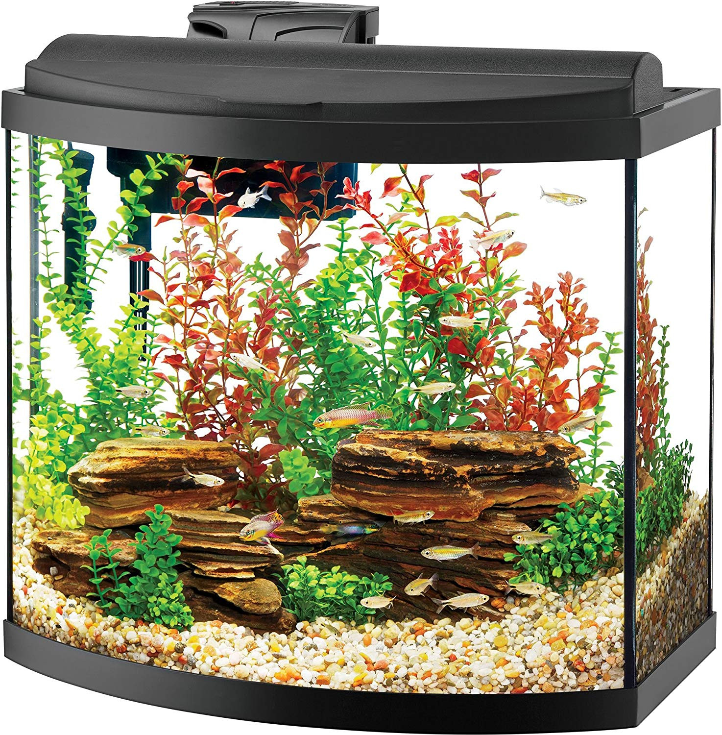goldfish aquarium top seven