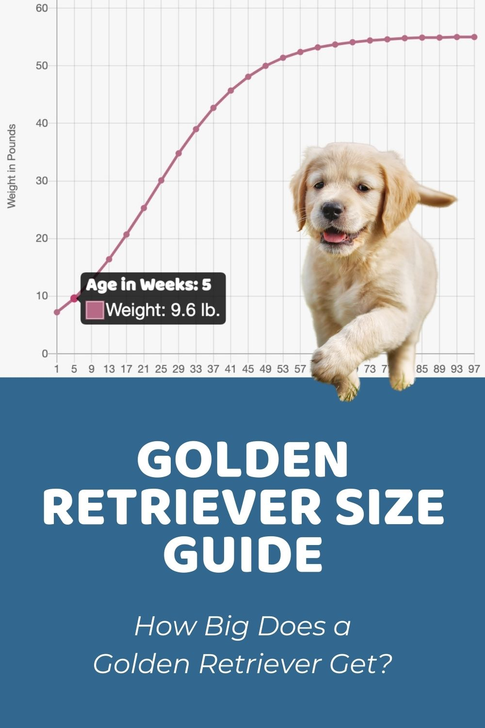 Just like there are dog people in th. Homepage Puppy Weight Calculator