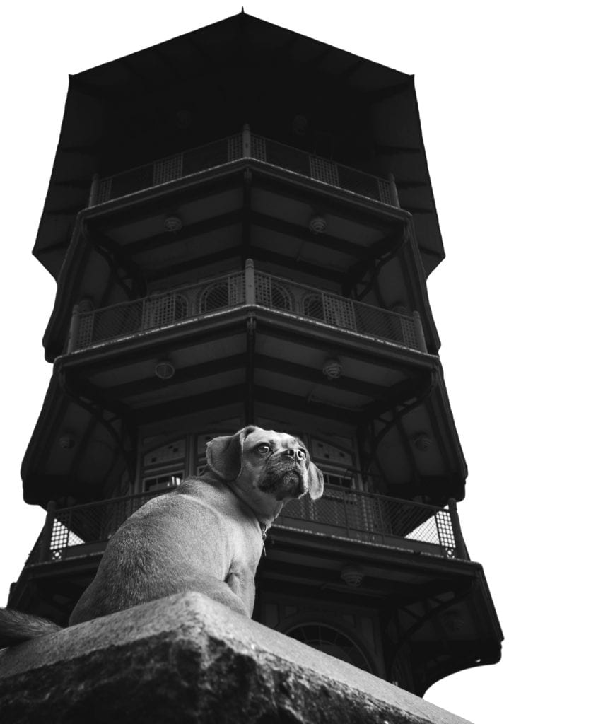 puggle nose baltimore pagoda patterson park