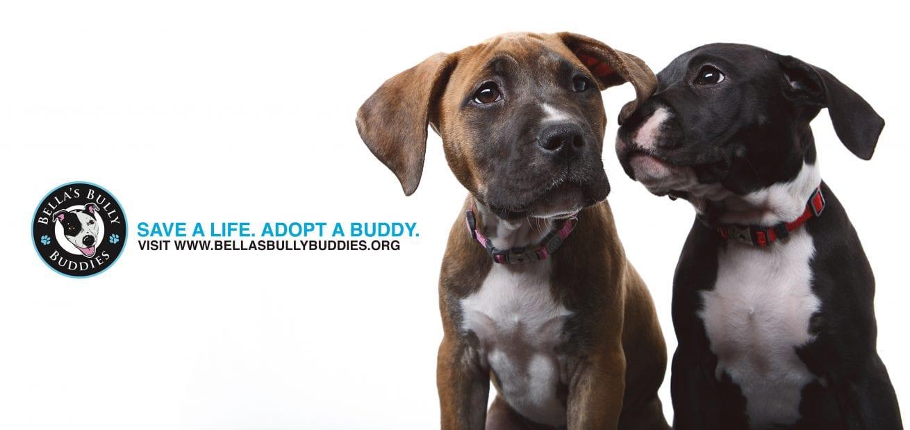 free probono pro portrait dog maryland pitbull