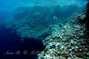 MPW Tide Pool Project