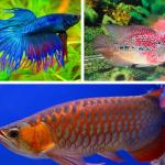Budidaya Ikan Hias