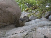 Ground Hog In Charge