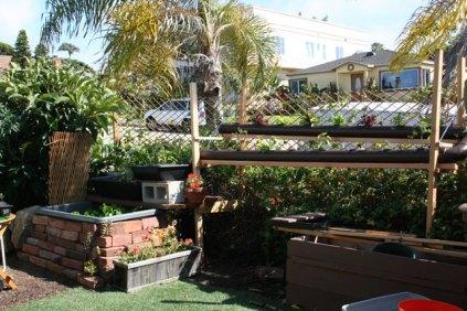Frontyard Aquaponic System