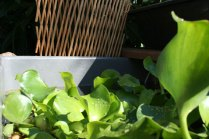 new-aquaponic-systems-123