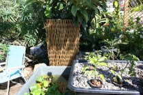 new-aquaponic-systems-136