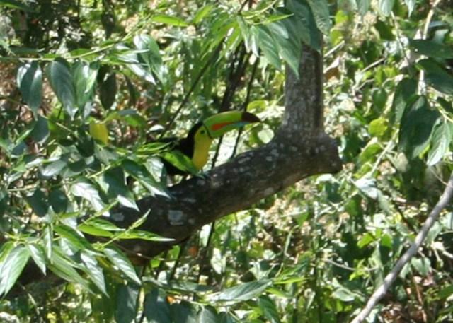 toucan atenas