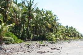 Playa bejuco Costa Rica Beach