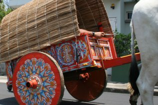 costa-rica-ox-cart-parade-atenas-11