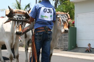 costa-rica-ox-cart-parade-atenas-12