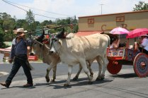 costa-rica-ox-cart-parade-atenas-3