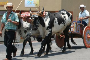 costa-rica-ox-cart-parade-atenas