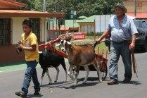 goat-cart