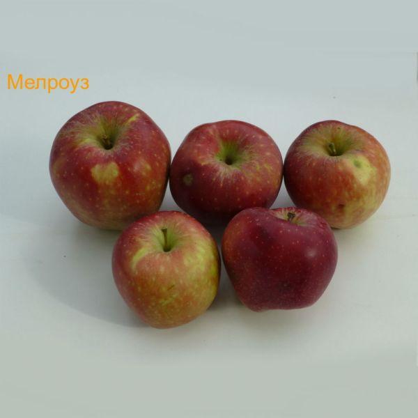 ябълки - Мелроуз
