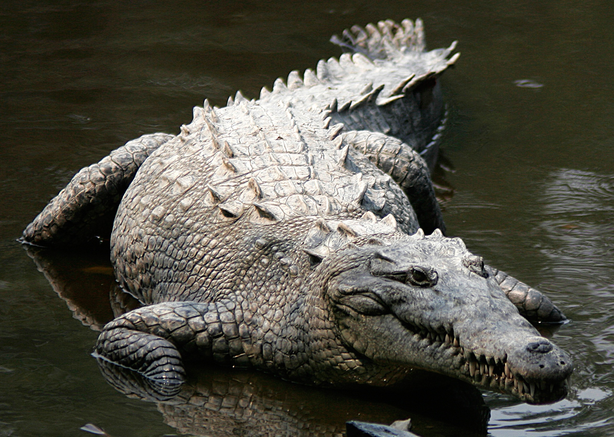 Crocodiles Galore Find These Awesome Creatures En Route