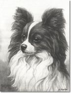 CONTINENTAL TOY SPANIEL (PAPILLON)