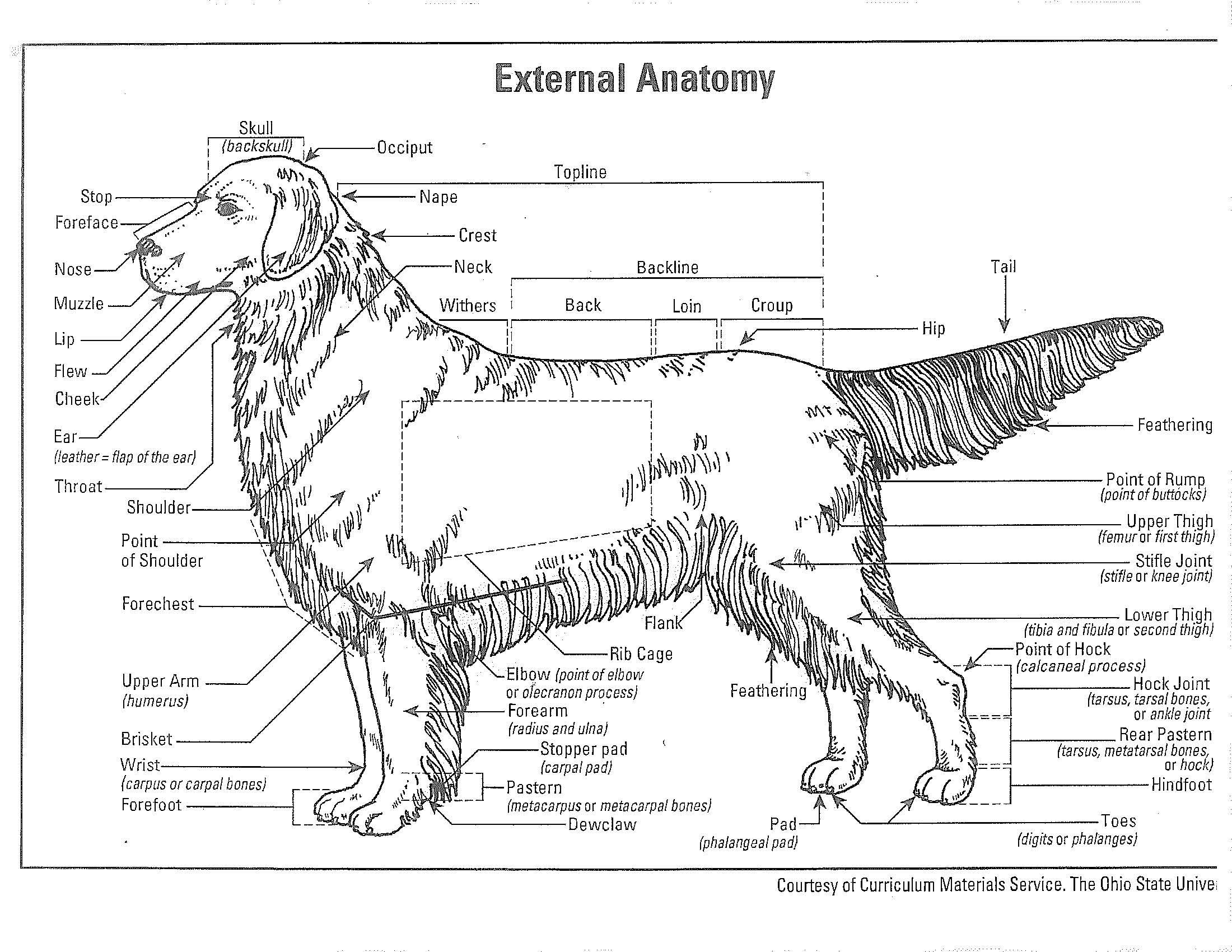 External Anatomy2