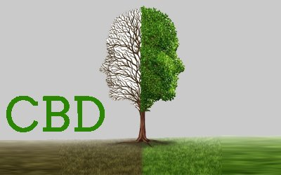 The Effects Of CBD On Bipolar Disorder