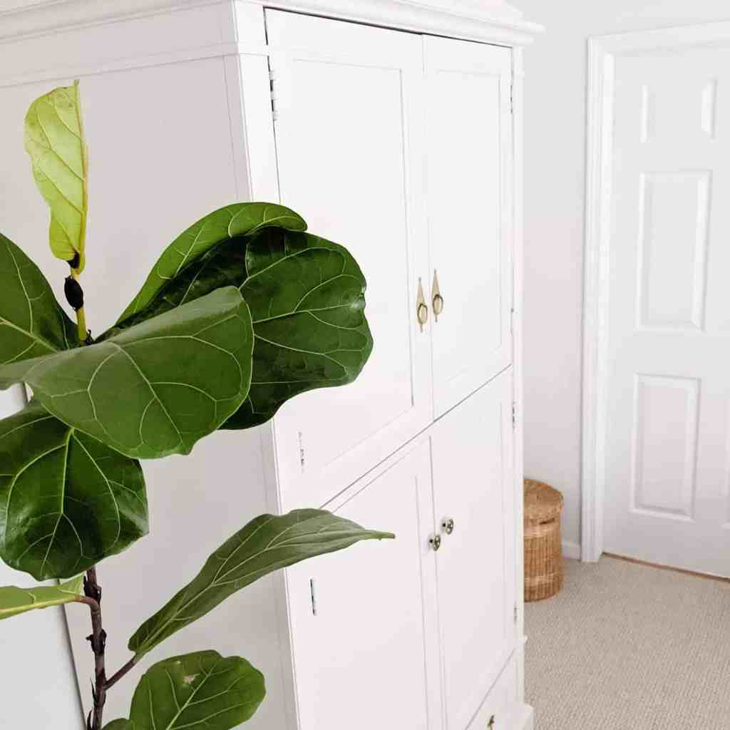 fiddle leaf fig tree white armoire