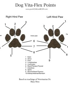 As also essential oils for pets pure home and body llc rh purehomeandbody