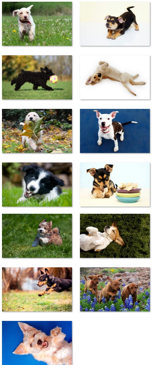 Puppies wallpapers sample 534_wide