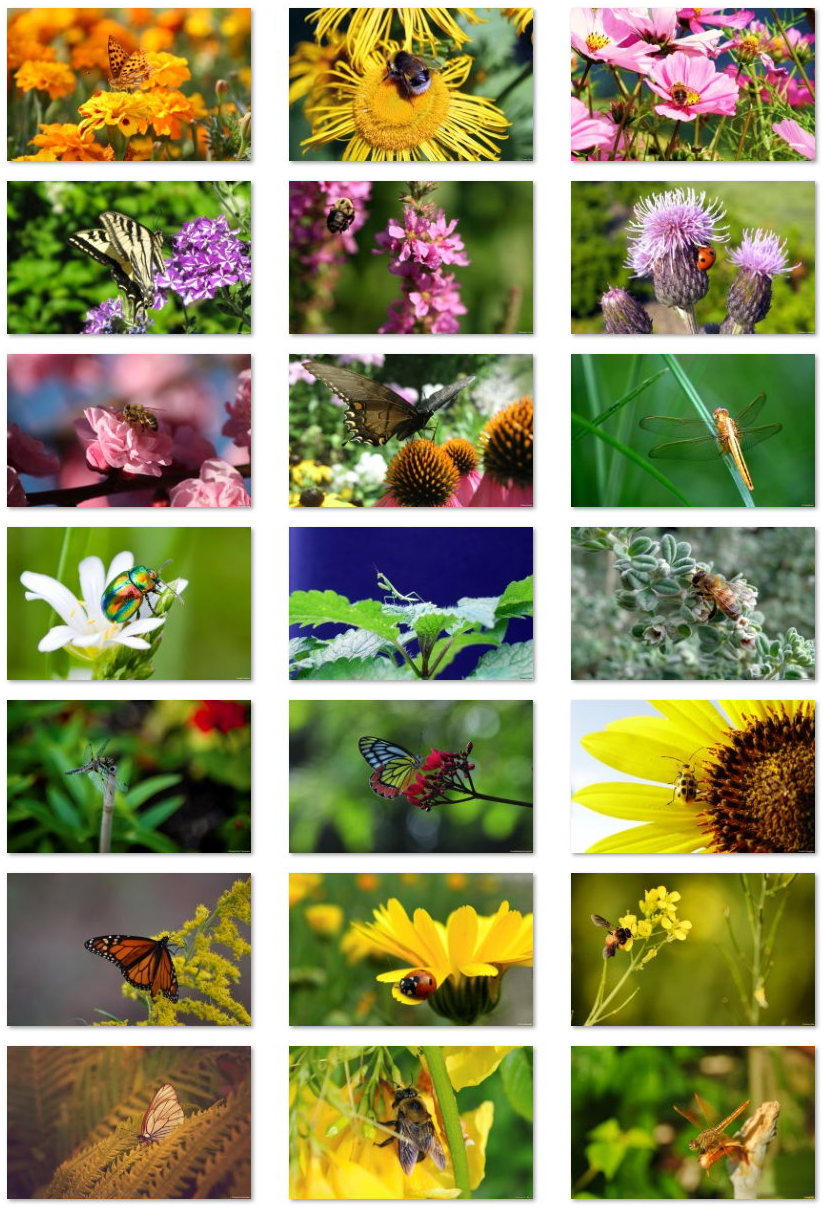 Insects wallpapers for Windows