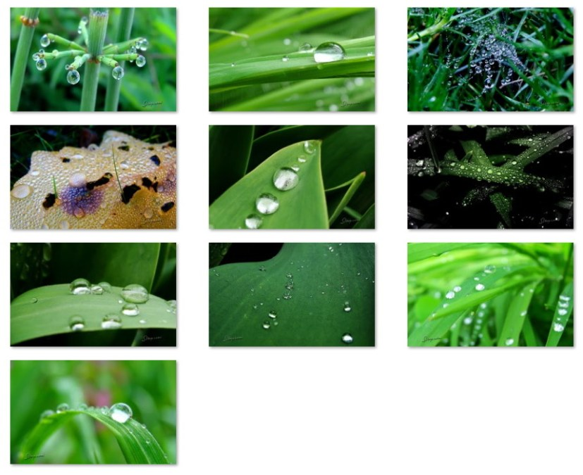 Raindrops and dew wallpapers