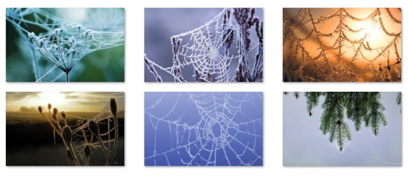 Spiderweb wallpapers
