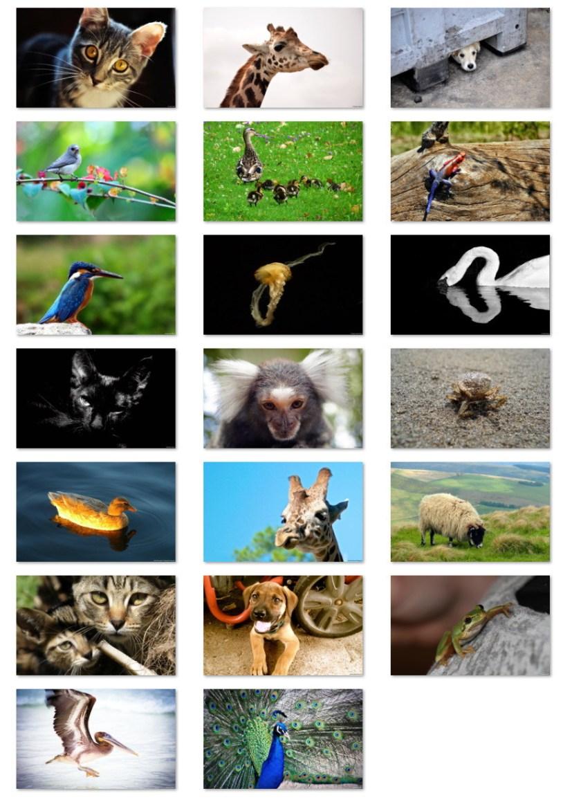 Fauna 2 wallpapers