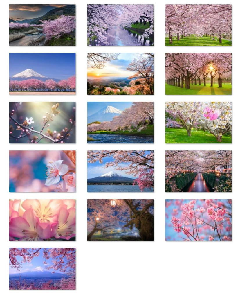 Cherry Blossoms wallpapers for Windows