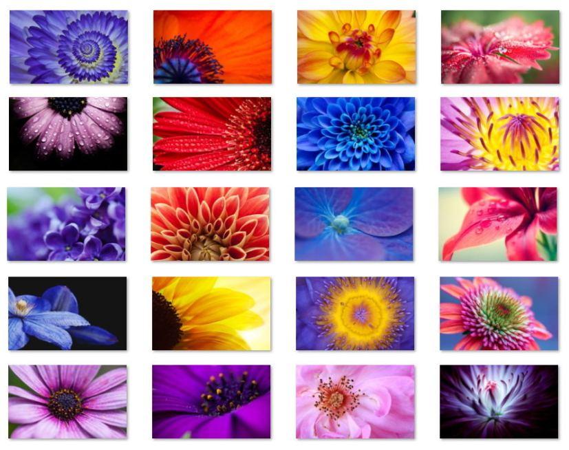 Flowers macro shots