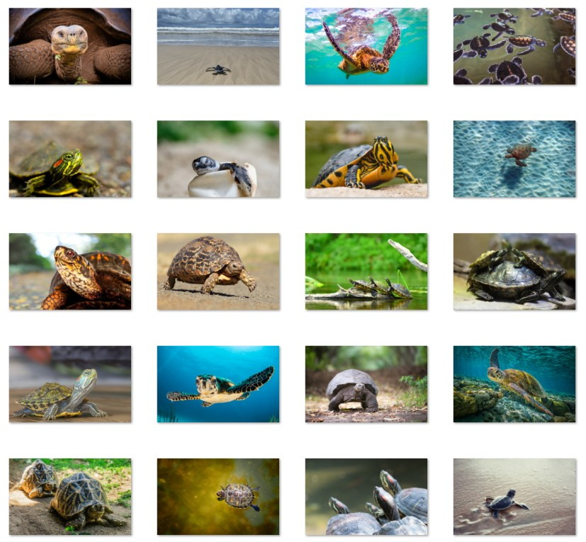 Turtles And Tortoises wallpapers